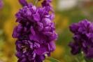 Балконные цветы (Фото 1)