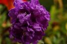 Балконные цветы (Фото 2)