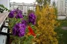 Балконные цветы (Фото 3)