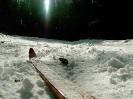 Снег, лыжа, шишка