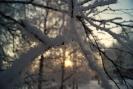 Снежная ветка