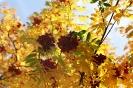 Осенняя рябина (Фото 1)