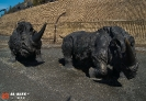 Скульптурная группа «Носороги» (Ханты-Мансийск)