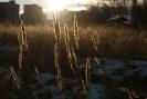 Осень в г. Краснотурьинск (Фото 5)